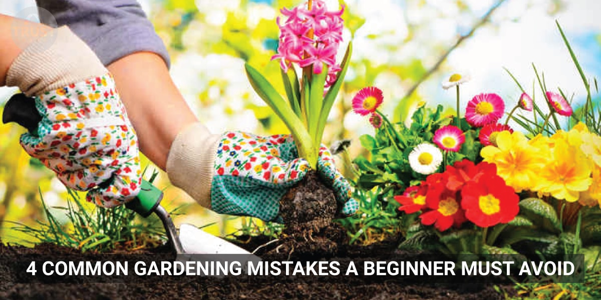 4 Common Gardening Mistakes a beginner must avoid