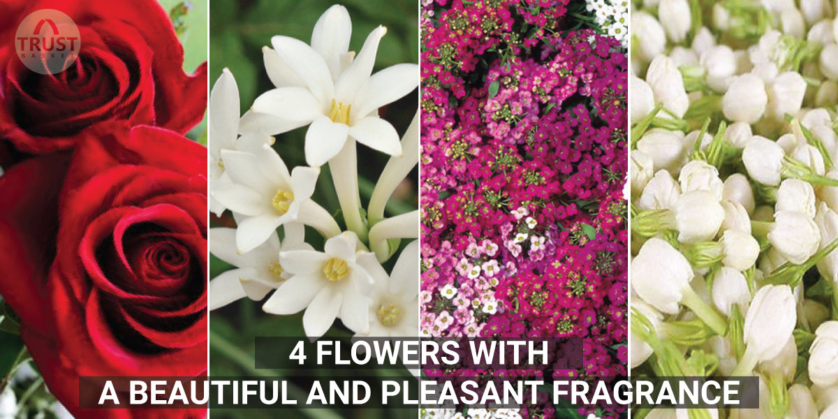 4 Beautiful Flowers with a Pleasant Fragrance