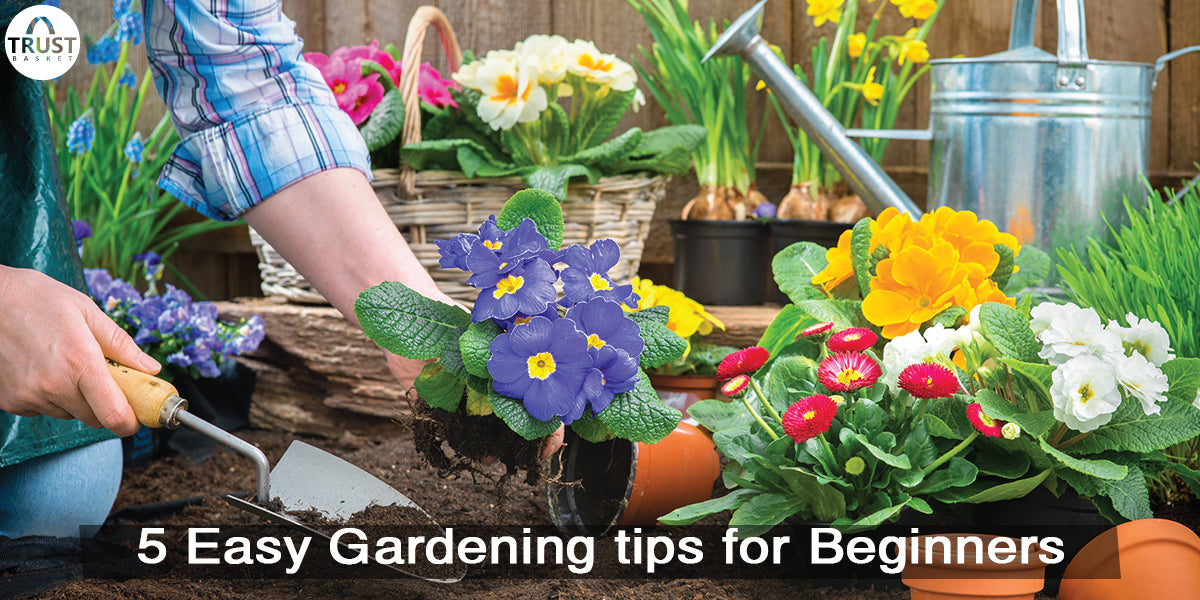 5 Easy Gardening tips for Beginners