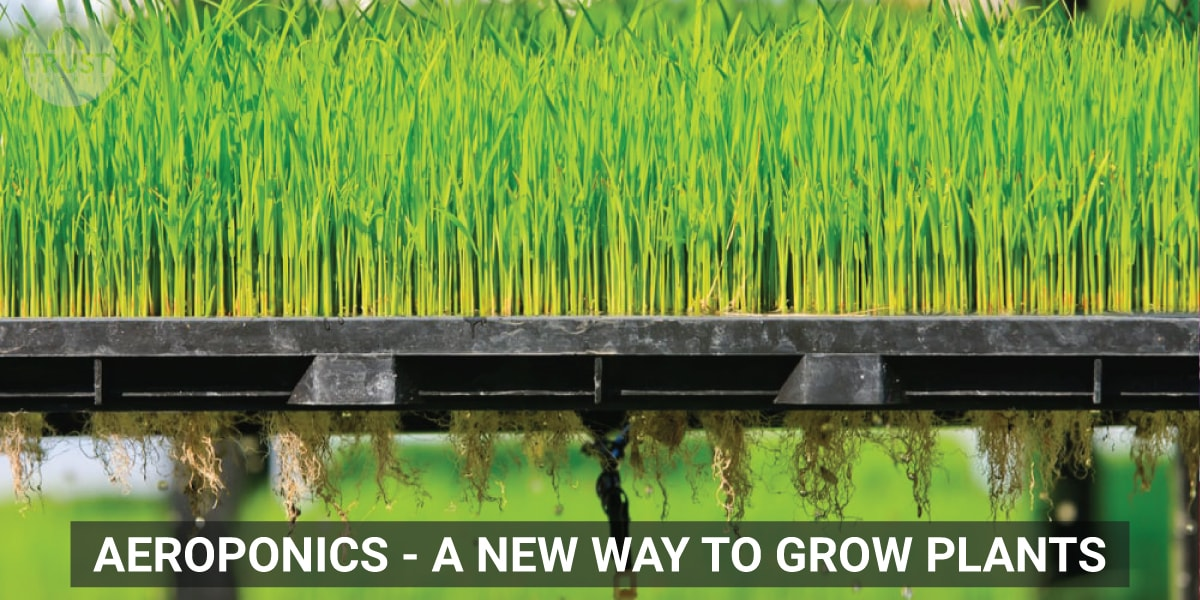 Aeroponics - A new way to grow plants
