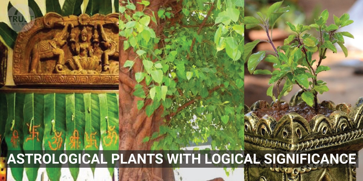 Astrological plants with logical significance