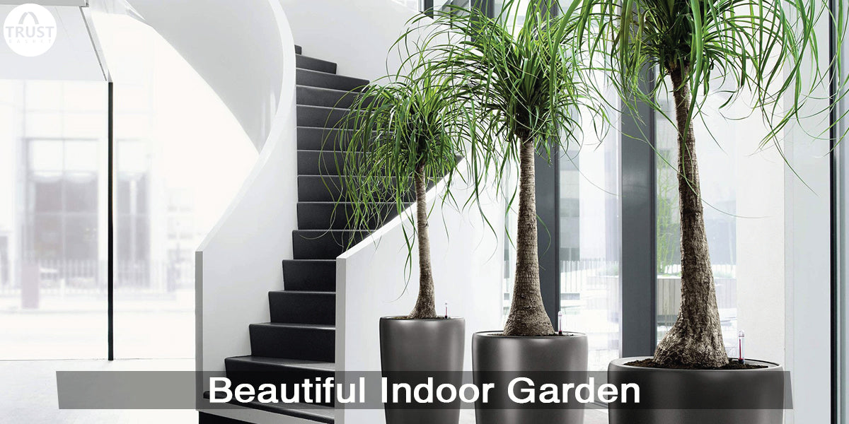 8 Tips to set up a Beautiful Indoor Garden