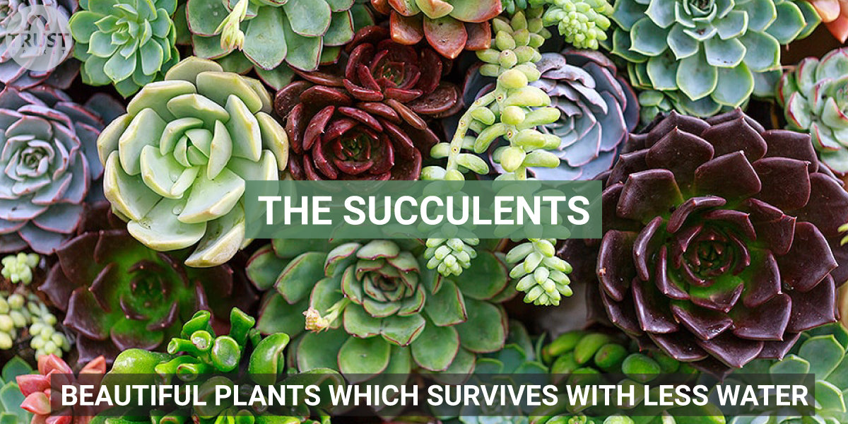The Succulents - Beautiful Plants which survives with less water
