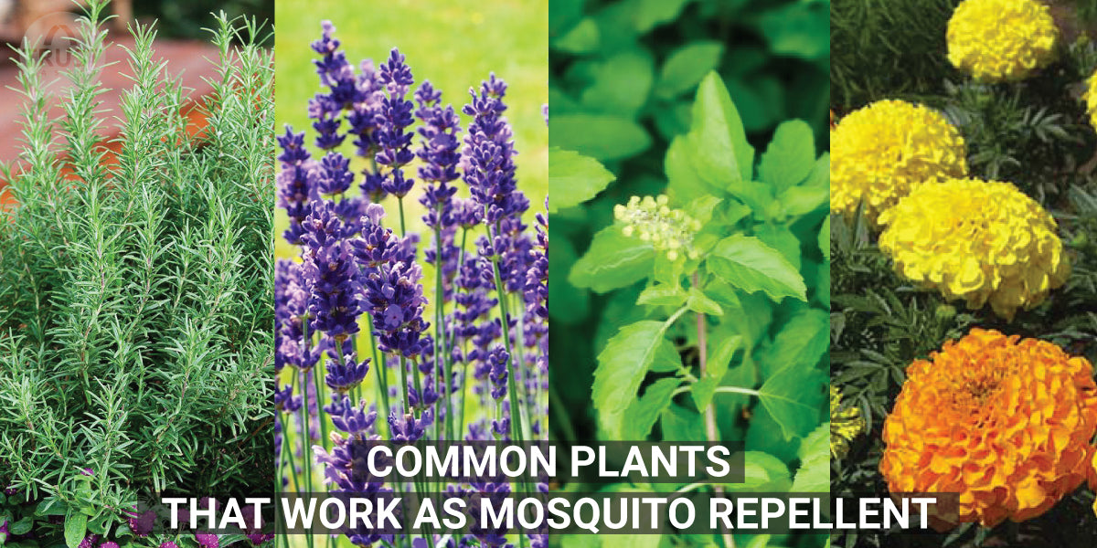 Common Plants that work as Mosquito Repellent