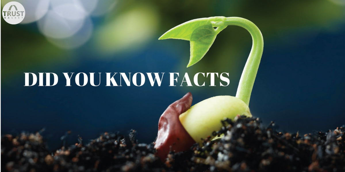 Did You Know Facts