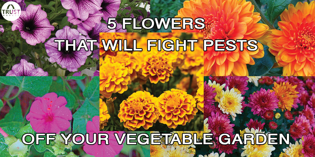 5 Easy Growing flowers and also fight pests off your vegetable garden!!!!!