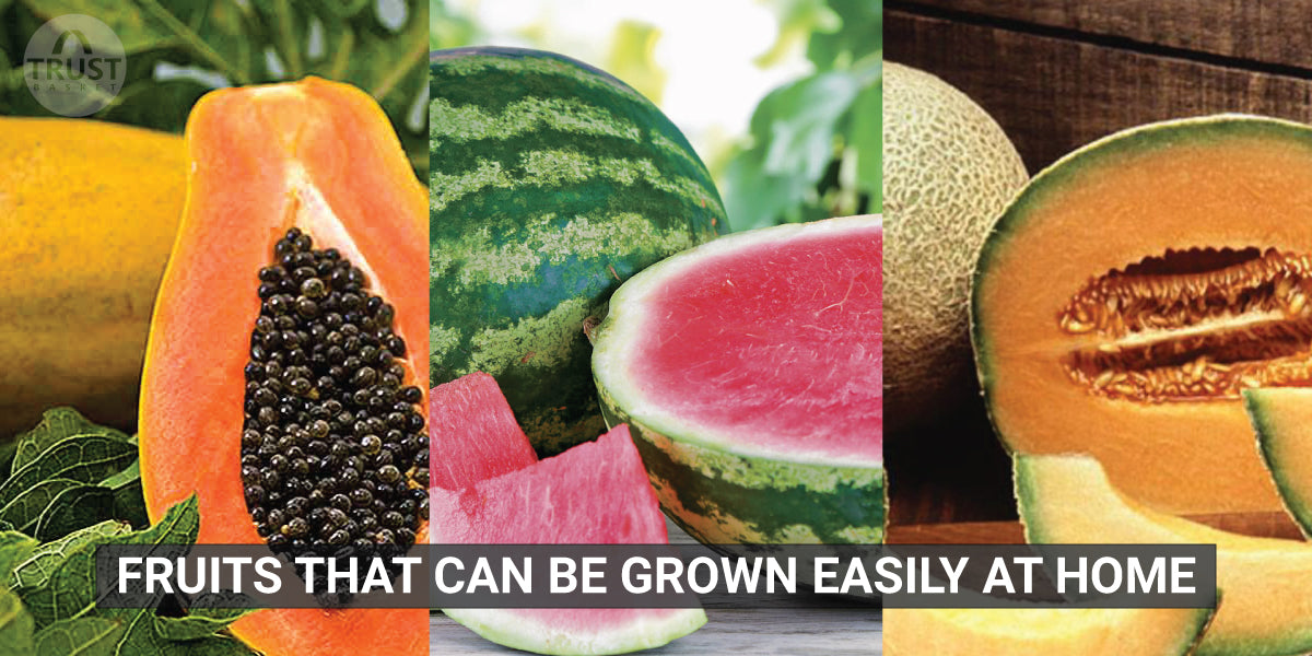 Fruits that can be grown easily at home