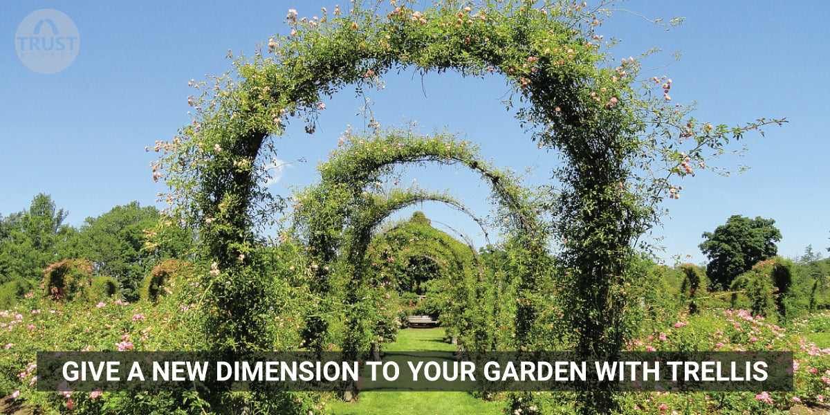 Give a new dimension to your garden with Trellis