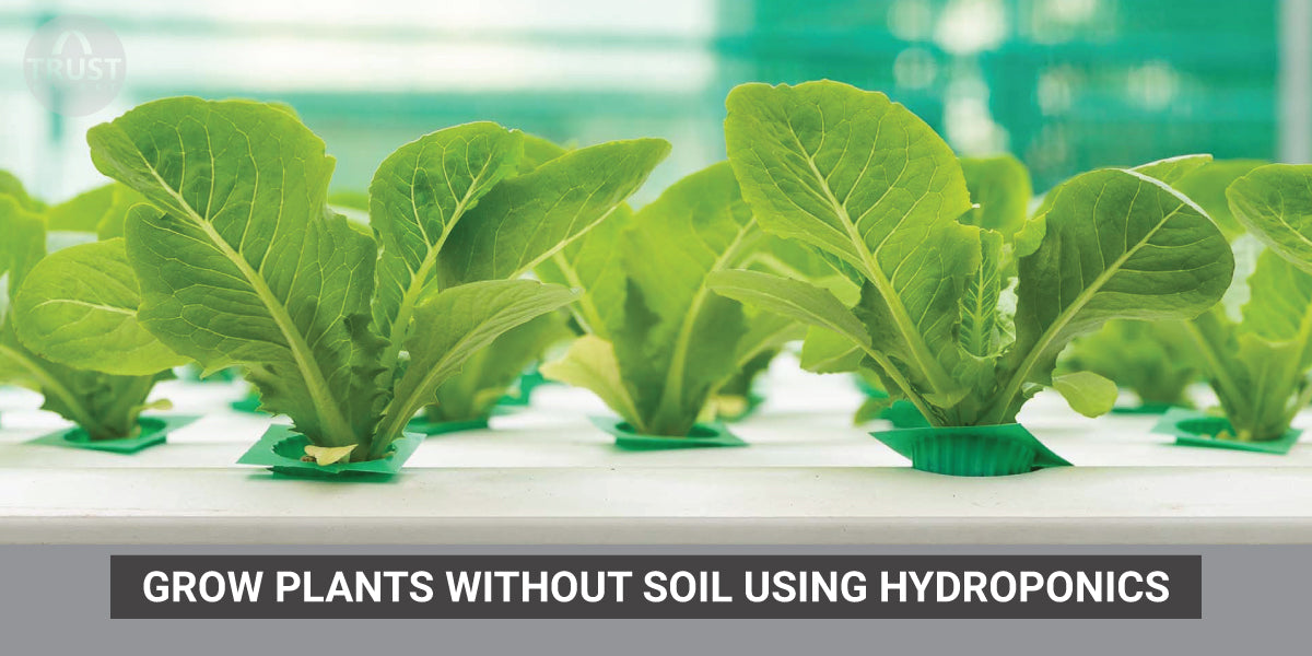 Grow Plants without soil using Hydroponics