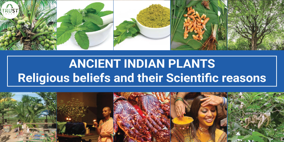 ANCIENT INDIAN PLANTS - Religious beliefs and their Scientific reasons