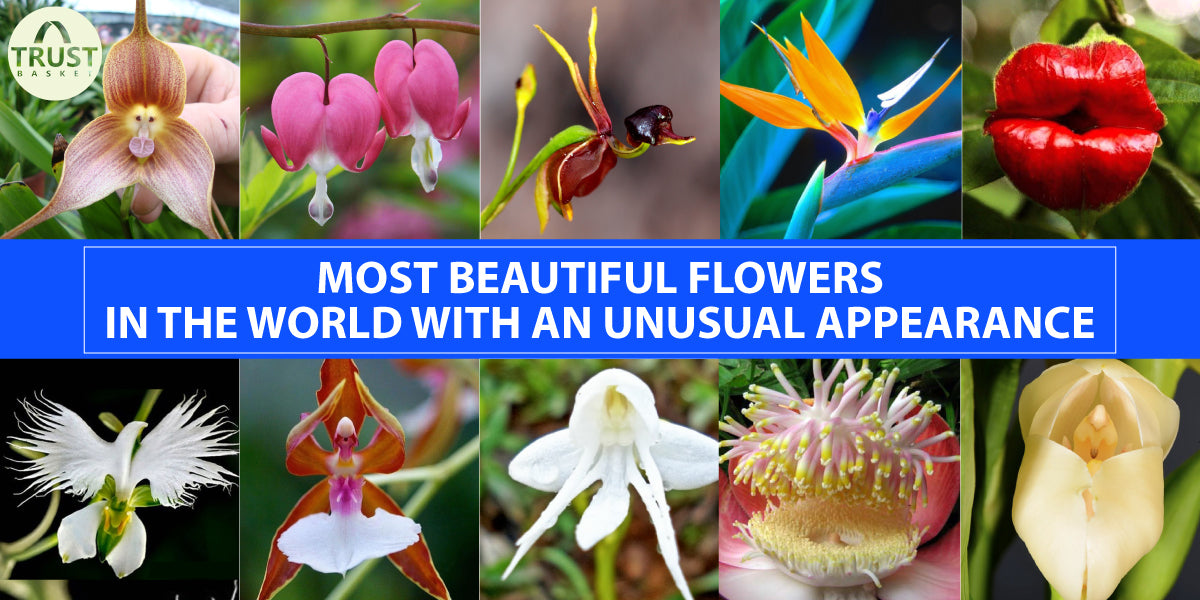 Most Beautiful flowers in the world with an unusual appearance ...