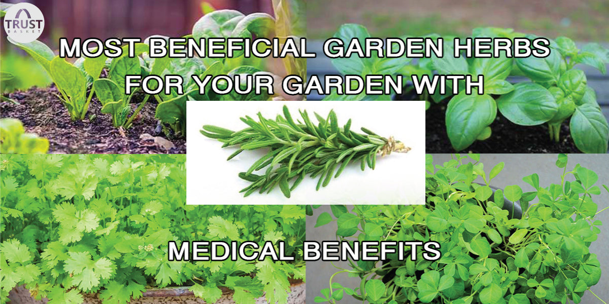 Easy growing Garden Herbs for your garden with medicinal benefits
