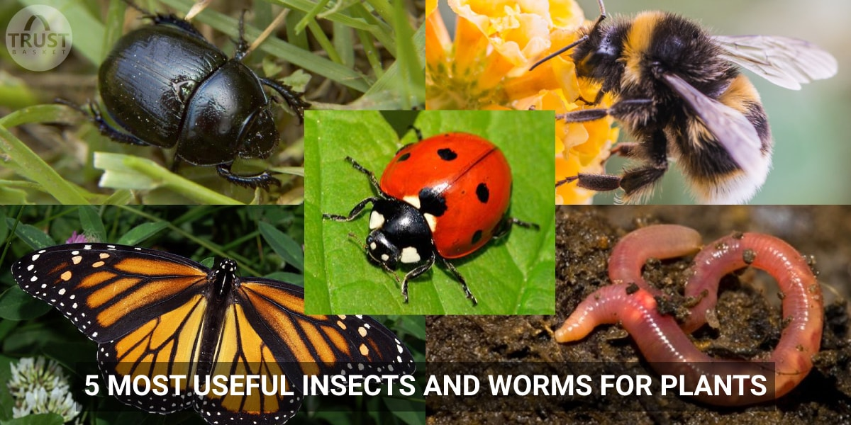 5 Most useful insects and worms for plants