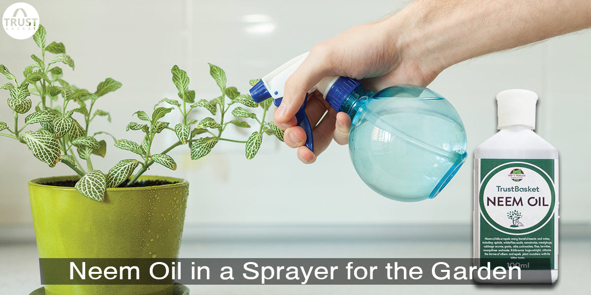 How to Use Neem Oil in a Sprayer for the Garden