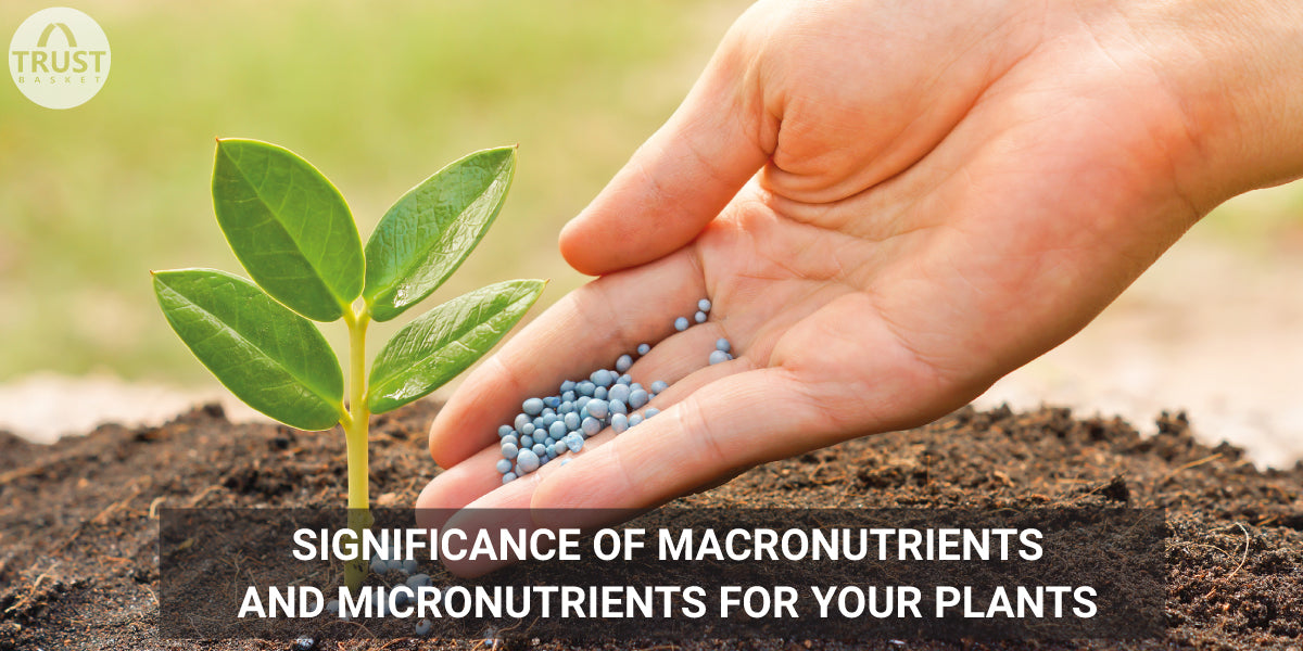 Significance of Macro nutrients and Micro nutrients for your plants