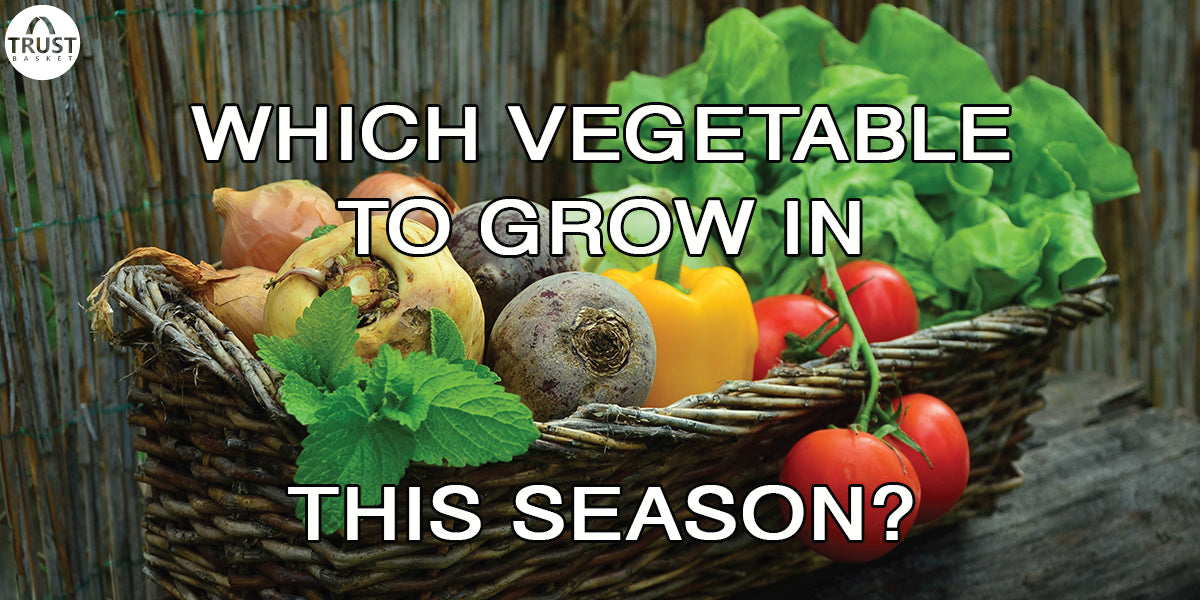 5 Vegetable gardening suggestions for this season