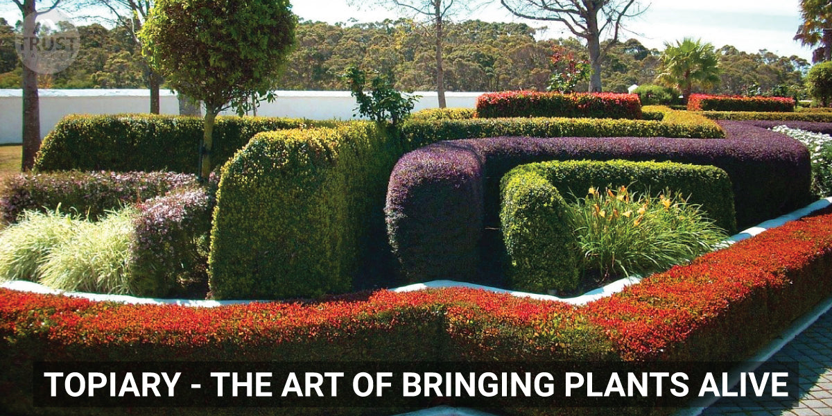 Topiary - The art of bringing plants alive