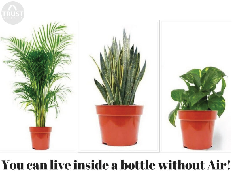 You can live inside a bottle without Air!!! Have a look at this fantastic study.