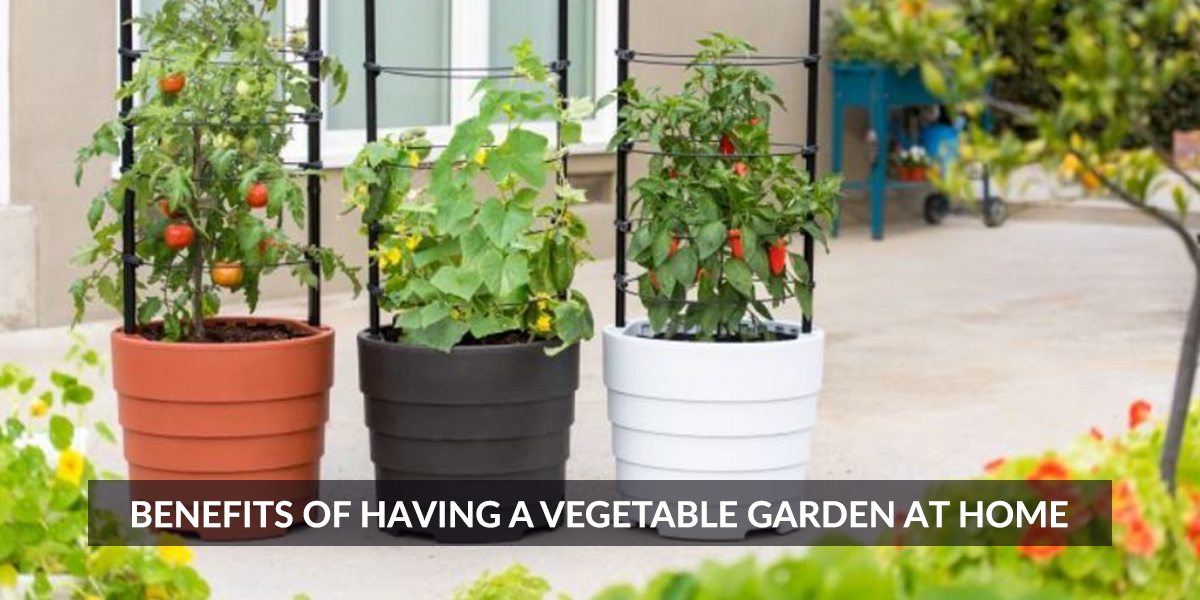 Benefits of Having a Vegetable Garden at Home