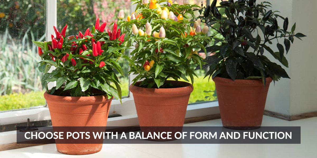 Choose Pots with a Balance of Form and Function