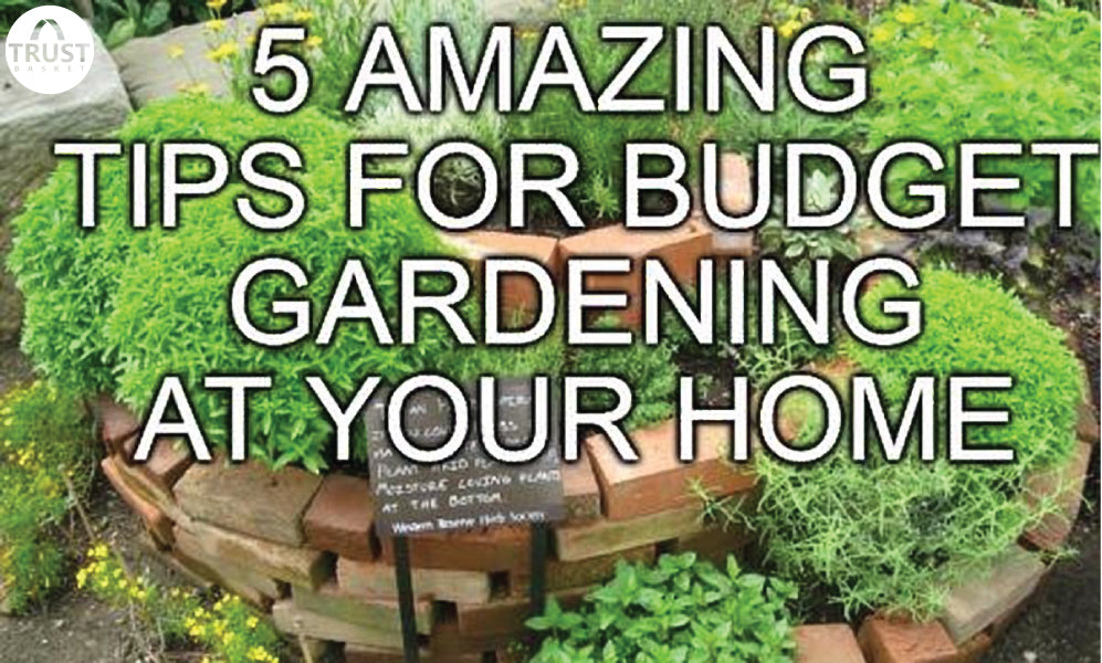 TOP FIVE Small Garden Ideas To Start Now