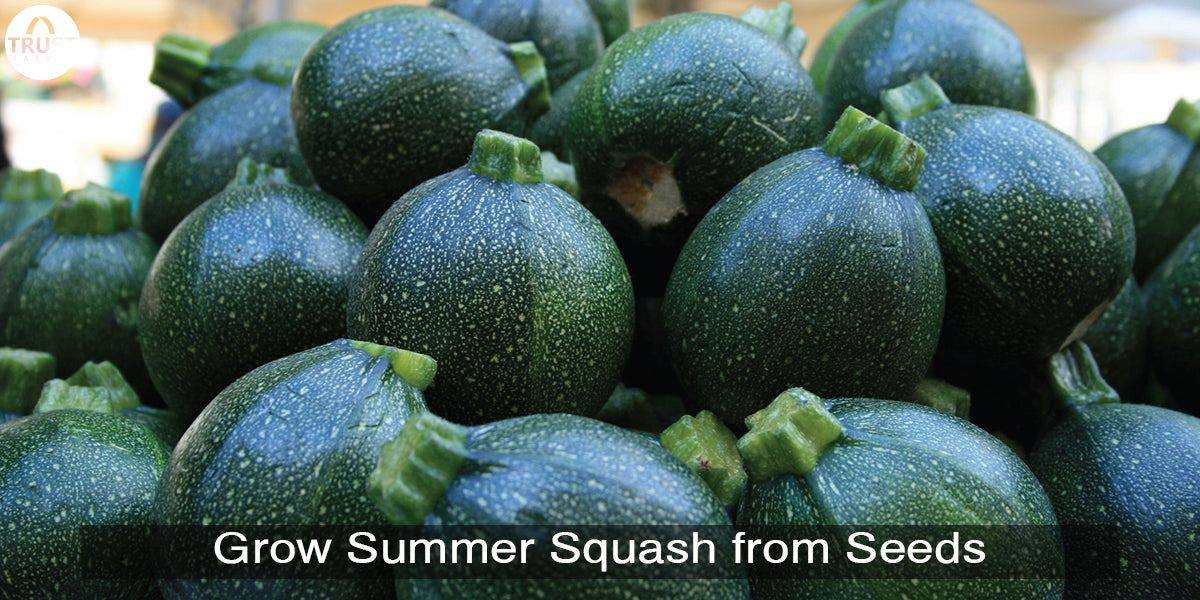 How to grow summer squash from seeds