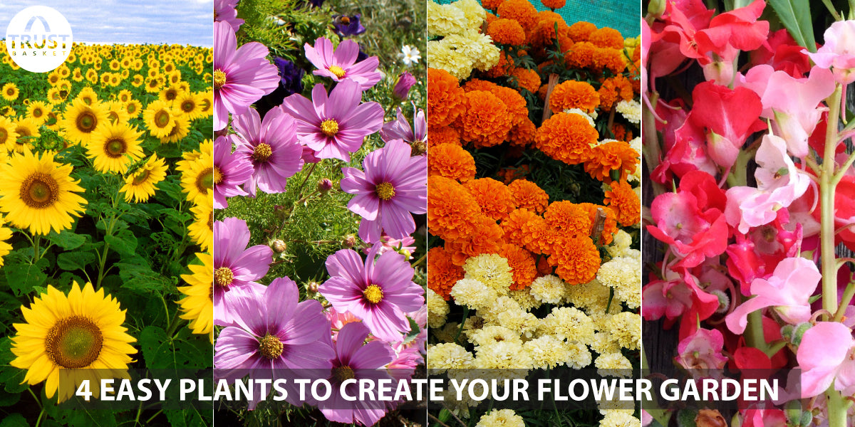4 Easy plants to create your flower garden