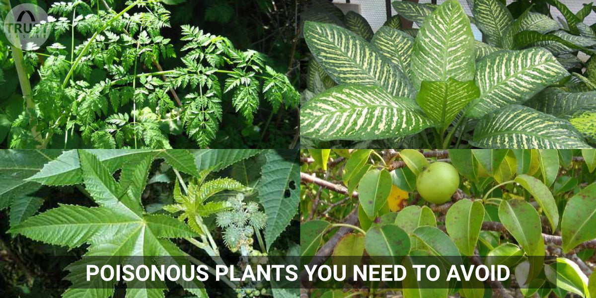 Poisonous plants you need to avoid
