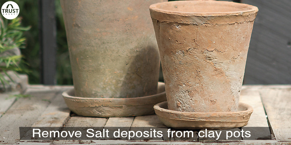 How to remove salt deposits from clay pots?