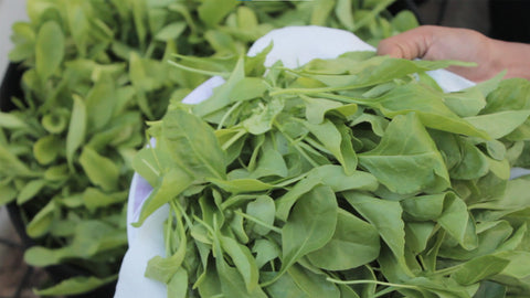 Harvested spinach leaves - tips to grow spinach plants