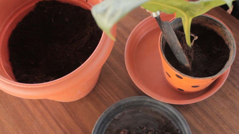 adding kitchen compost to plants - Trustbin indoor composter