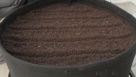 making rows to sow seeds - how to grow spinach