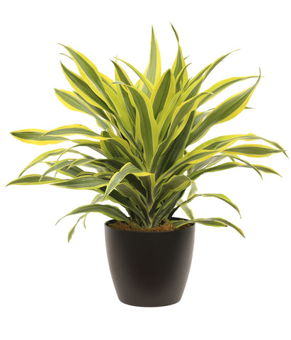 4 Easy House Plants That Can Grow With Less Maintenance