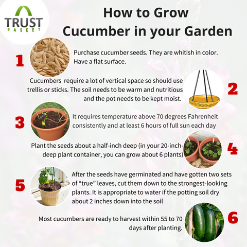 how to plant and grow cucumbers