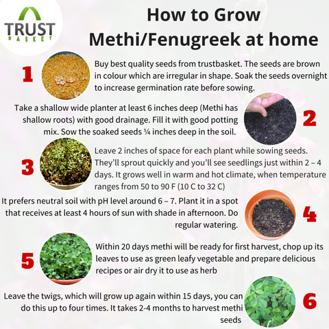Easy steps to grow Methi