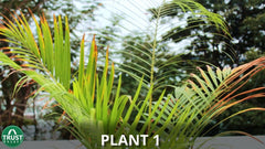 plant that is deficient in nutrients