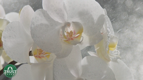 orchid - how to select plants