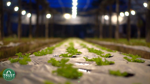 artificial lighting - how to select plants according to climate