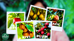 how to select fruits according to climate