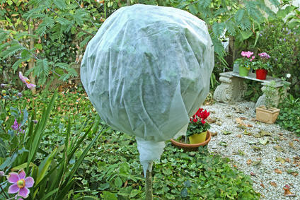 wrapping the plant with plastic - outdoor plant care in winter