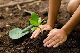benefits of compost to plants