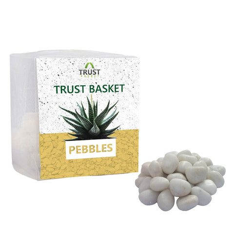 Coloured Pebbles Online - TrustBasket White Pebbles (1 Kg)