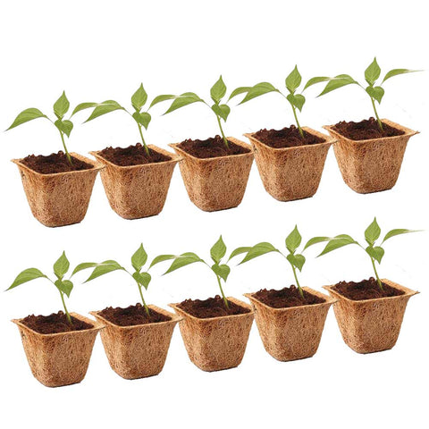 Coir Pots - 6.5 inches (Set of 10)