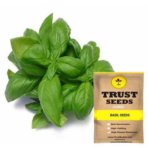 All Greens and Fruits Seeds - Basil Seeds (Hybrid)
