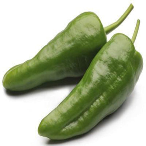 Chilli big seeds (Hybrid)
