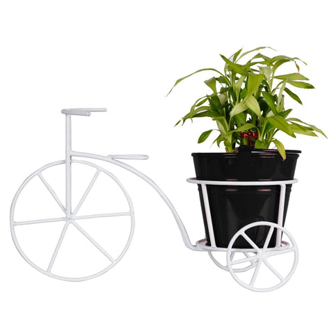 Lucky Bamboo Plant and Bucket Planter with Bicycle