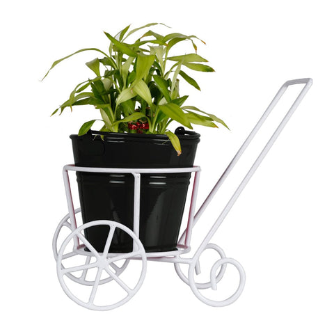 ALL INDOOR PLANTS ONLINE - Lucky Bamboo Plant and Bucket Planter with Trolley