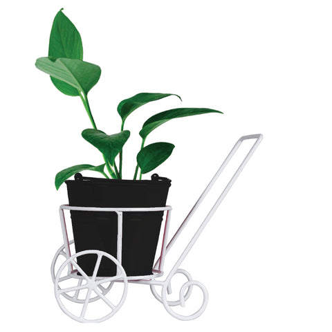 Money Plant and Bucket Planter With Trolley