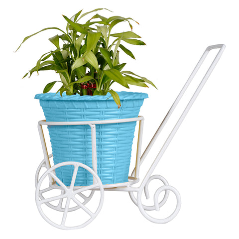 Lucky Bamboo Plant and Plastic Planter with Trolley