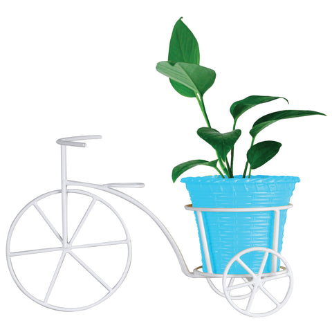 Money Plant and Plastic Planter With Bicycle